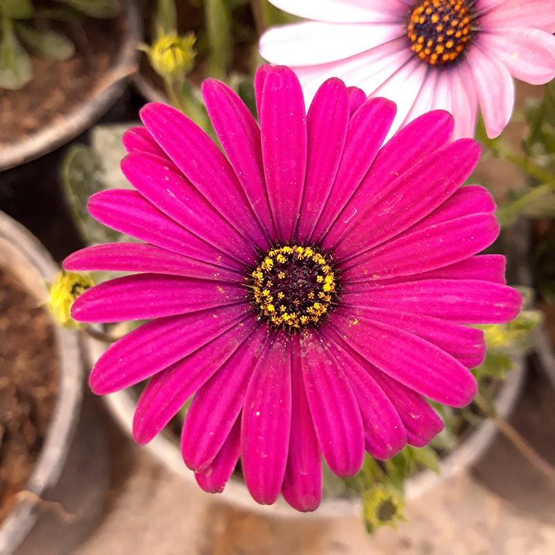 گیاهان گلدار