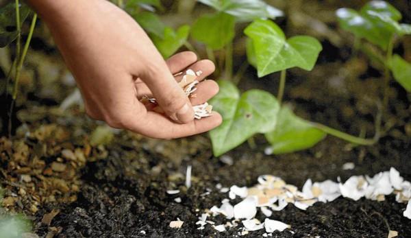 قرص کلسیم برای گیاهان آپارتمانی
